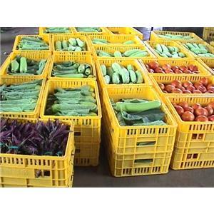 新会蔬菜快餐配送